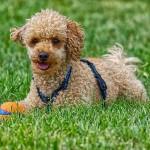 Masové konzervy pro psy
